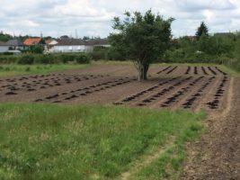 La nourriture pour le sol